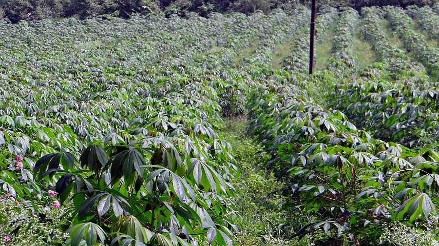 Commercial Farming Ideas in Nigeria: Tips for Profitable